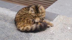 Pet cats backround. Unit isolate Stock Photo