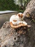 Pet cats backround. Unit isolate Stock Image