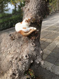 Pet cats backround. Unit isolate Stock Photography