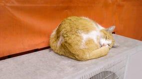 Pet cats backround. Unit isolate Royalty Free Stock Image