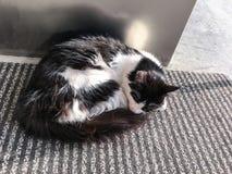 Pet cats backround. Unit isolate Stock Photos