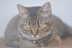 Pet cats Stock Photo