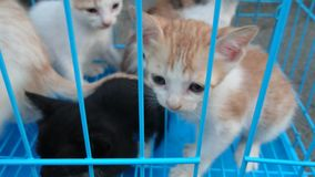 The pet cats were lovely, but they were caged