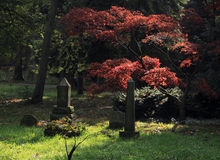 Pet Cemetry Royalty Free Stock Images