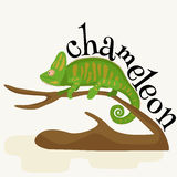 Pet chameleon for home, lizard and reptile isolated vector pictograms Royalty Free Stock Image