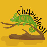 Pet chameleon for home, lizard and reptile isolated vector pictograms Stock Photos