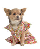Pet clothes Stock Photo
