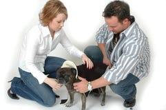 Pet Clothing royalty free stock photo