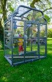 Pet Cockatiels в там birdcage, увиденном на лужайке лета Стоковое Изображение RF