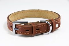 Pet collar Stock Photos