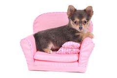 Pet Comfort Royalty Free Stock Images
