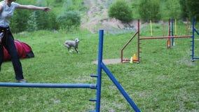Pet a competência na competição, raça animal da agilidade com o cão que corre e que faz o slalom Sequência com movimento lento vídeos de arquivo