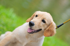 Pet Competition Series 6 royalty free stock photography