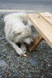 Pet cruelty Royalty Free Stock Photo