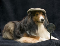 Pet Detective Royalty Free Stock Photography