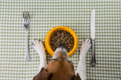 Pet diet Stock Photos