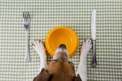 Pet diet Stock Photography
