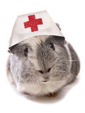 Pet doctor Stock Image