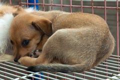 Pet dog. Closeup of pet dog in a market Stock Photography