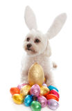 Pet dog animal with easter eggs royalty free stock images