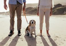 Pet dog on beach with owner couple. Pet dog sitting on the beach with owner couple. Mature couple on morning walk with their pet dog stock photos