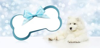 Pet dog with blank gift card bone shape isolated on christmas bl Stock Photo