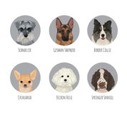 Pet dog breed round badge stickers vector illustration