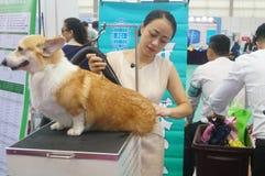 Pet dog care. Nursing care of pet dog, shearing, washing, etc., at the Shenzhen international pet show stock images