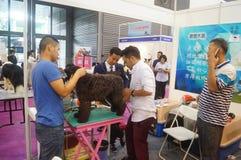 Pet dog care. Nursing care of pet dog, shearing, washing, etc., at the Shenzhen international pet show royalty free stock photos