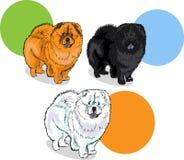 Pet dog chaw chaw royalty free illustration
