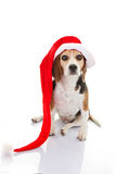 Pet dog christmas holiday gift or present. In santa hat Stock Photos