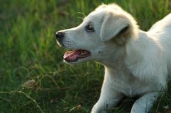 Pet dog. Cute pet dog, human friend, to interact with the owner stock photo