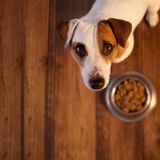 Pet dog eating foot Royalty Free Stock Photography