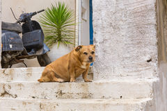 Pet dog at the entrance to the house Stock Image
