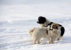 Pet dog Stock Photos