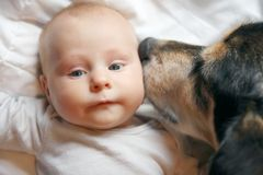 Pet Dog Kissing Two Month Old Baby Royalty Free Stock Image