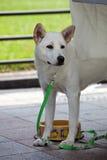 Pet dog looks at something. Royalty Free Stock Photos