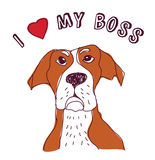 Pet dog love boss isolate on white. Royalty Free Stock Photography
