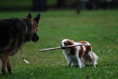 Pet dog Stock Image