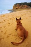 Pet dog sitting by the sea Royalty Free Stock Images