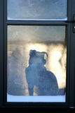 Pet Dog Waiting at Frosty Door for Owner to Return Home Stock Images