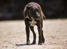 Pet dog Stock Photo