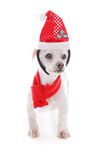Pet dog wearing  Christmas headband and scarf. Pet dog wearing a Christmas santa hat headband and red and white scarf.  White background Stock Images