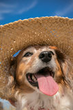 Pet dog wearing a straw sun hat at the beach Royalty Free Stock Images