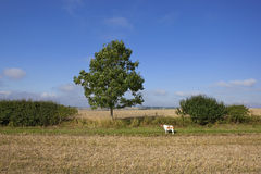 Pet dog and young ash tree Royalty Free Stock Photography