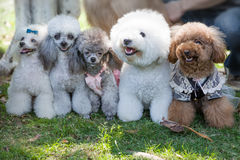Pet dogs Stock Photography