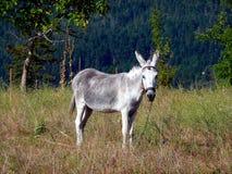 Pet Donkey in Field, Greece Royalty Free Stock Photo