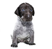 pet drakter Royalty Free Stock Photos