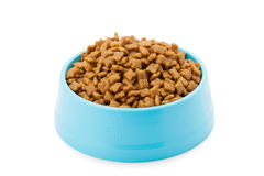 Pet dried food in cyan plastic bowl Stock Image