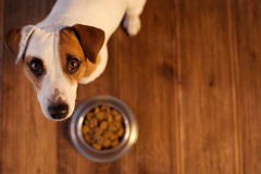 Pet eating food Stock Photos
